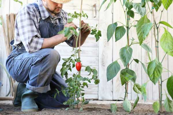 Vegetable Gardening With Hilltop Acres